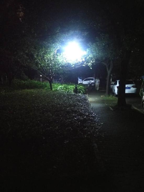 樱花公园点亮后