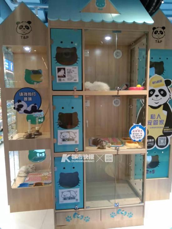 开进了滨江宝龙城的宠物店 摄影 | 楼金靖