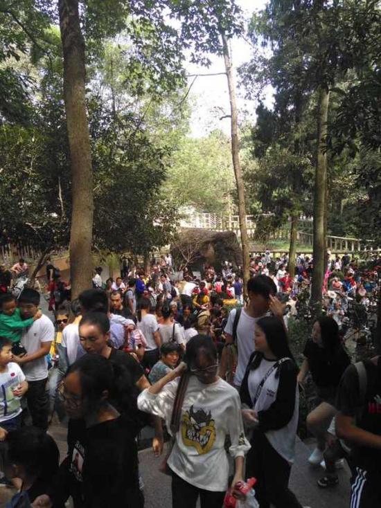 (上图:杭州动物园10月1日游客2.31万人次,2日3.09万人次。与灵隐、三潭印月并列收费景区前三甲。江先生 摄)