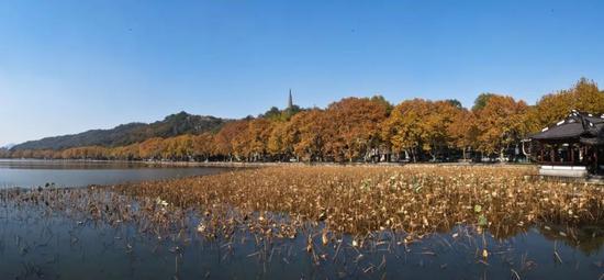 国庆长假杭州西湖西溪景区又有新玩法 攻略请收好