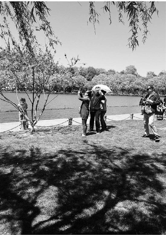 游人踏进草坪拍照