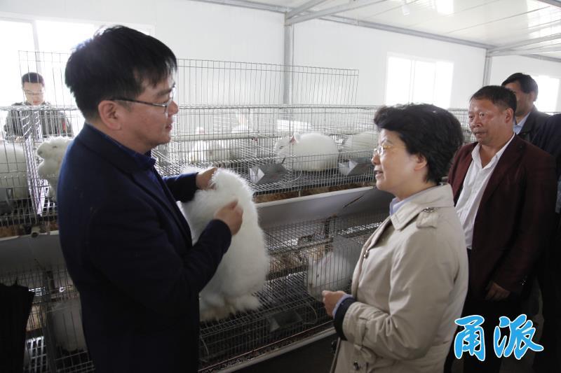 长毛兔产业