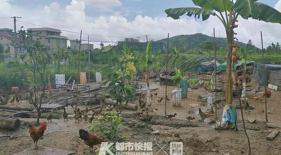 爸爸偷鸡儿子望风 温州这对默契父子被依法刑事拘留