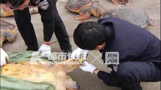 在网友发布贴子后,海龟的这些触目惊心的照片让网友们非常气愤。