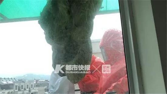 富阳郭女士窗外的巨型马蜂窝