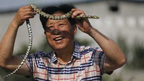 对养蛇户来说,蛇是他们的摇钱树。