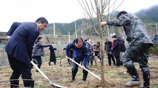 """延续38年的""""植树拜年"""" 程磊 摄"""
