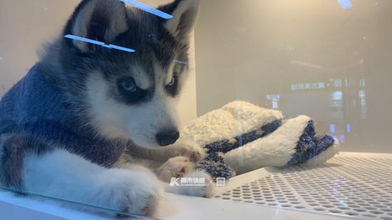 宠物狗 摄影 | 楼金靖