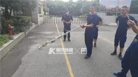 杭州一小区半个月出现3条蛇 业主崩溃吓得要搬家