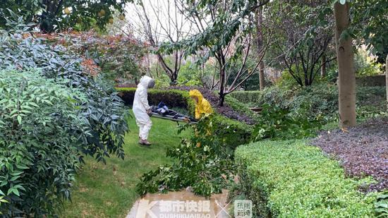 浙1男子摘马蜂窝不慎从大树摔下 受伤被送往医院