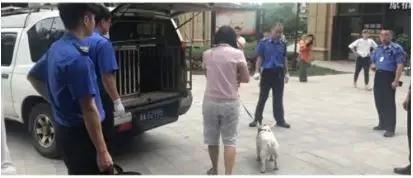 城管和物业到犬主家带走了伤人的斗牛犬。图片来自小区物业群
