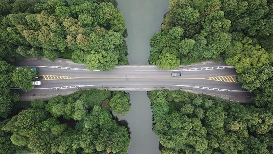 图为:西湖杨公堤附近树木青翠(航拍)。王刚
