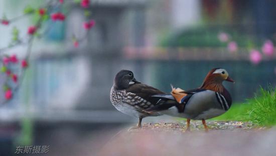 杭州最近这群小可爱正在西湖边找婚房 并准备待产