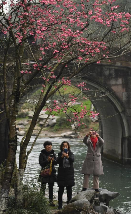 图为:三位游人在观赏樱花。