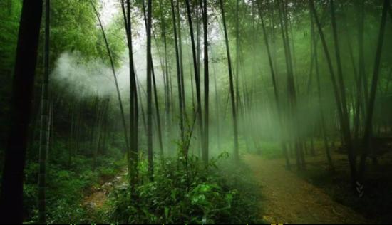 浙江省国家级森林公园增至44处 其中杭州9处上榜