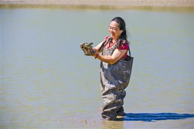 楼菊珍手捧生态养殖的甲鱼。