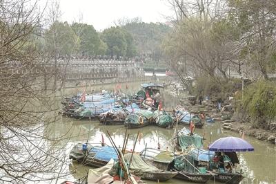 昨日下午,城区大浦闸渔船停泊点,30多艘渔船停泊到位