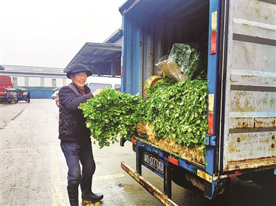 商户正在搬运从萧山运来的芹菜
