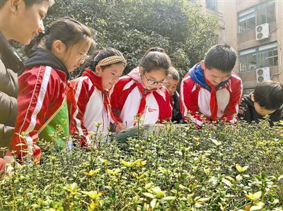 孩子们在做植物大搜索。