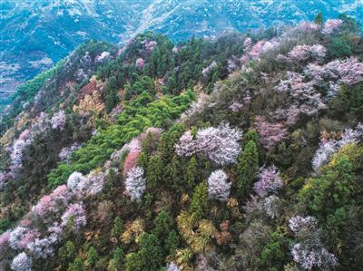 大杭州的春天,有一种浪漫约定——一起去看漫山遍野的花花世界!