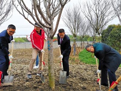 西湖大学云谷校区开工仪式上,校长施一公(左三)与捐赠人代表共同种植樱花树。 新京报记者 黄哲程 摄