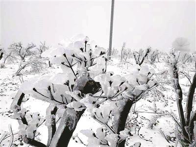 市气象台测雪观测站拍摄到的临安雪景。
