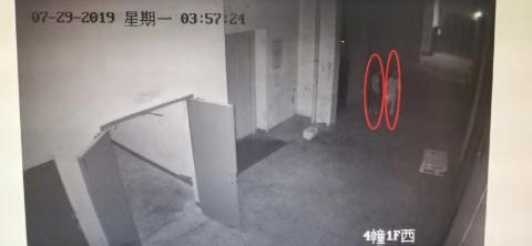 杭州一小偷搭档盗窃上瘾 取保候审又被抓