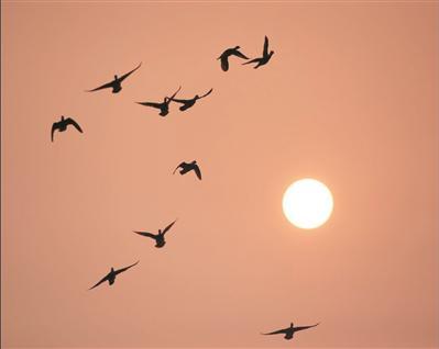 """放一个2月24日的太阳,增强召唤力量。 快拍小友""""杭州老潘"""" 摄"""