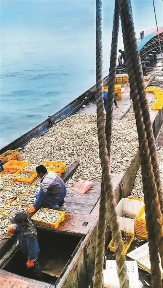满船的海鲜图片由渔民提供
