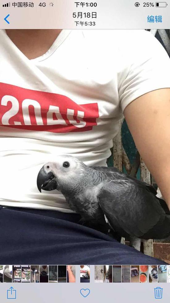 来之不易的灰鹦鹉才养了9天,小林就不想要了。