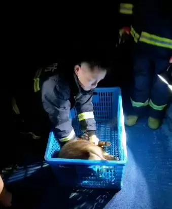 六只野猪冲进杭州市区 小区幼儿园半夜上演捉猪记