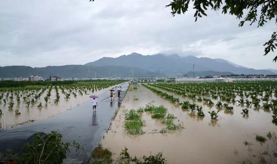 9号台风利奇马过境 黄岩受灾及抢险救灾情况通报