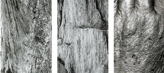 杭州90后摄影师纽约开展 作品关注人与环境(组图)