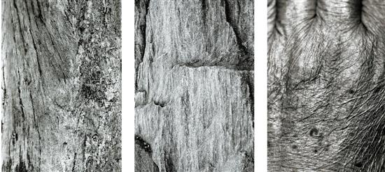 《地球三联幅》组图