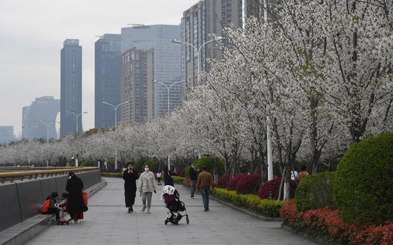 多位市民在樱花树下散步。王刚 摄
