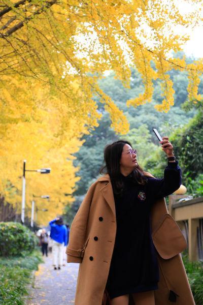 图为:杭州市民正在拍摄银杏树叶。王远摄