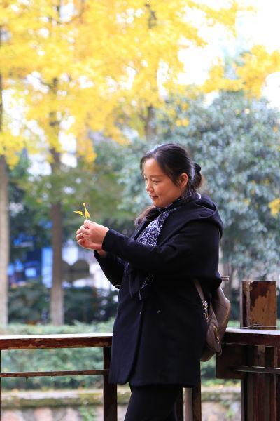 图为:当地市民正在欣赏飘落的银杏叶。王远摄