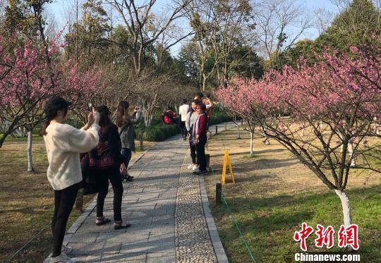 3月,杭州西湖景区的游客们正在赏花。 张斌 摄