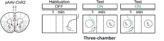 光遗传学实验示意图