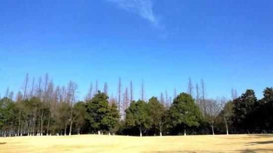 """冬日里的""""杭州蓝""""。拍友 江志清 摄"""