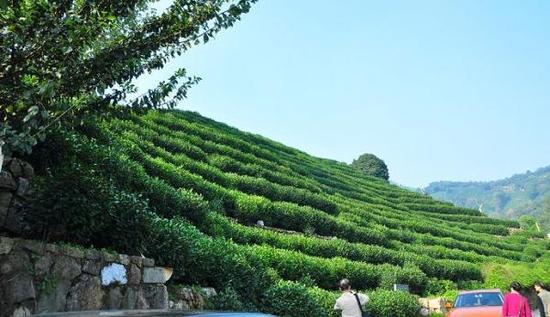 杭州市西湖龙井村的茶园。资料图