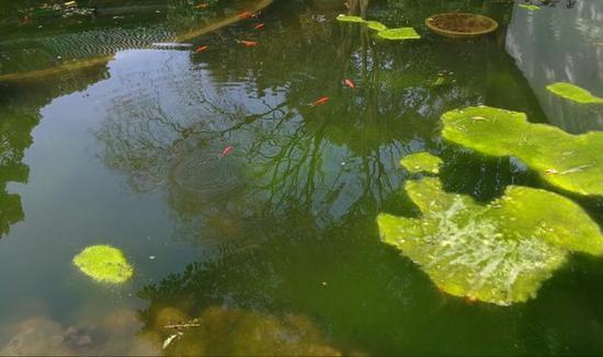 《游鱼戏水》慧摄于金华婺州公园
