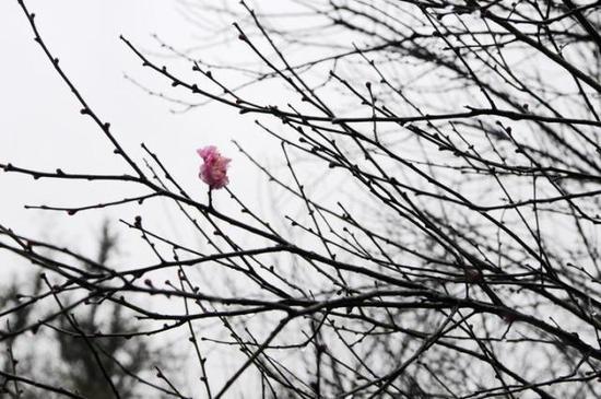 万木冻欲折,孤根暖独回。