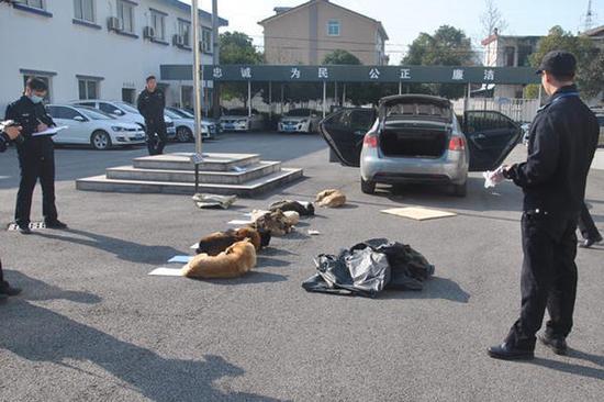 起亚车内搜出7条被毒死的狗