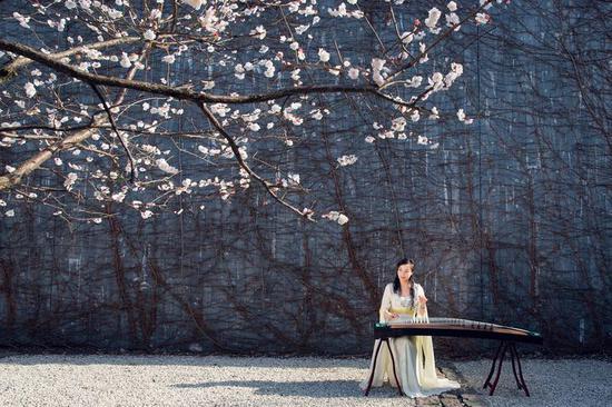 《梅园春色》舍得摄于金华