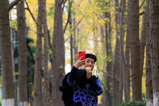 图为:杭州市民正在银杏树林中自拍。王远摄