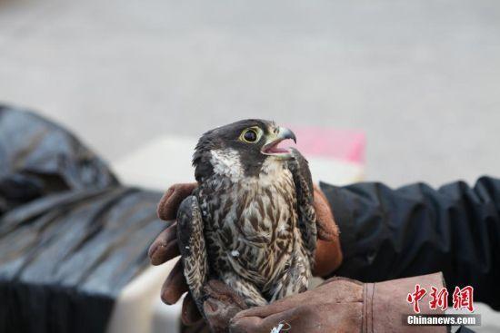 温州公安查处1非法猎捕野生动物案 抓获两名嫌疑人