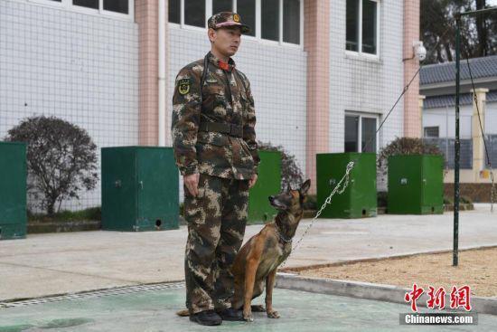 一只搜救犬正在等待训练指令。 中新社记者 王远 摄