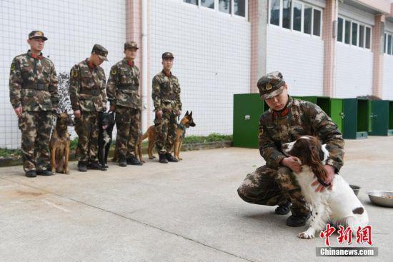训导员们正在与搜救犬们进行训前互动。 中新社记者 王远 摄