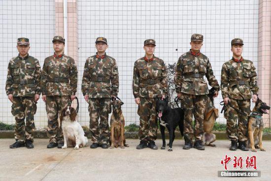 多只搜救犬正在列队等待集训。 中新社记者 王远 摄
